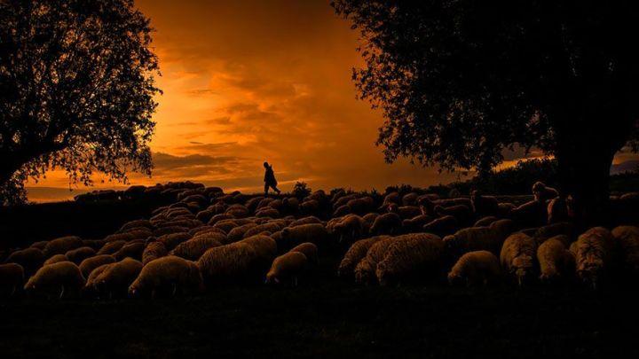 sheep-herds-around-the-world-22_result
