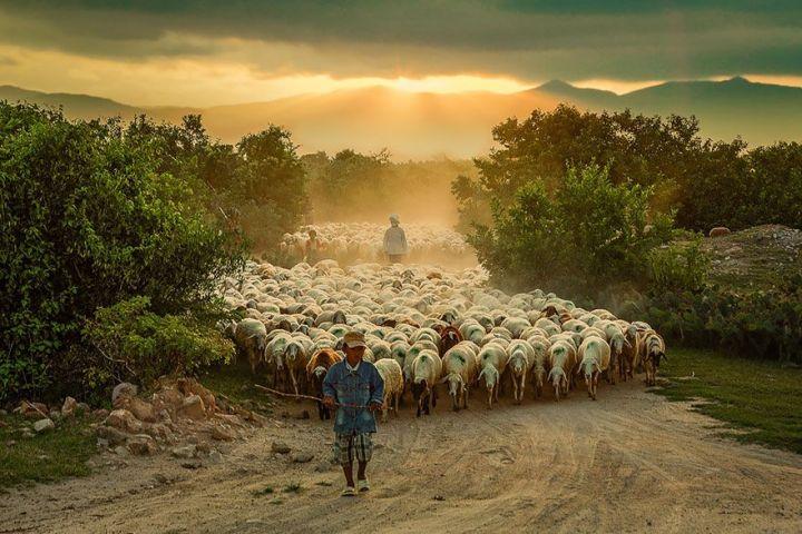 sheep-herds-around-the-world-3_result