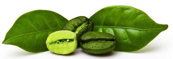 zelená káva prípravok na chudnutie
