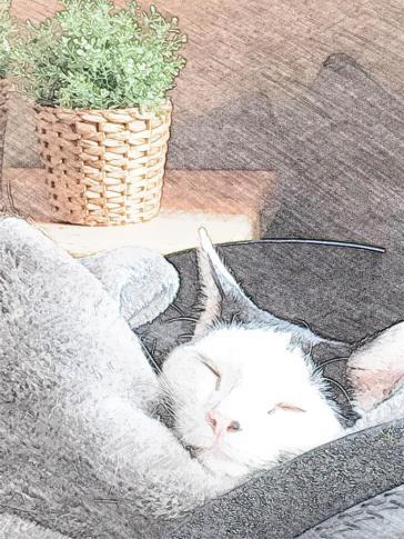 Max doet een dutje