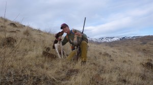 Brittany with two chukar