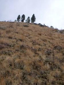 Steep hill for chukar hunting