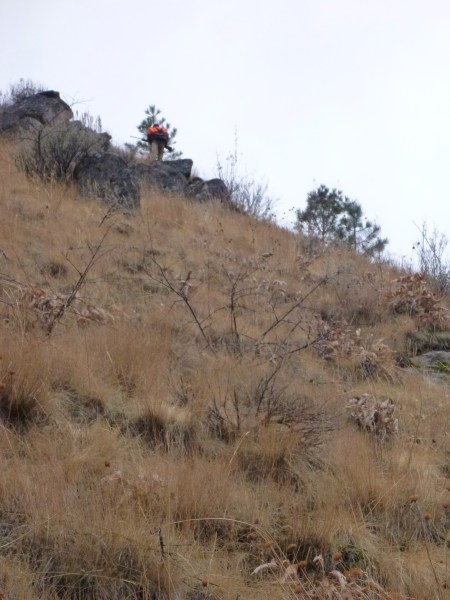 Steep hill chukar hunting