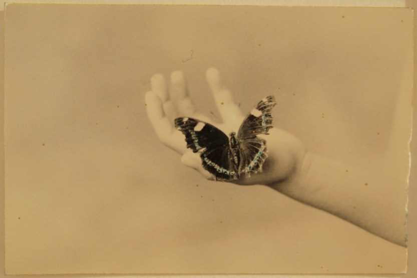 """gilliflower: """" hotparade: """" Masao Yamamoto """" """"i dream that i am a butterfly and pray that there is a butterfly dreaming he is me"""" - raymond queneau """""""
