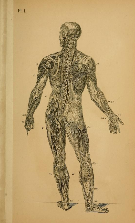 """nemfrog: """" Plate 1. Brain, spinal cord and nervous system. They are not dead. 1879. """""""