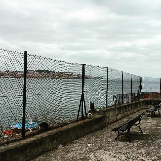 #Lisboa cat life // http://ift.tt/1BJ2Tve