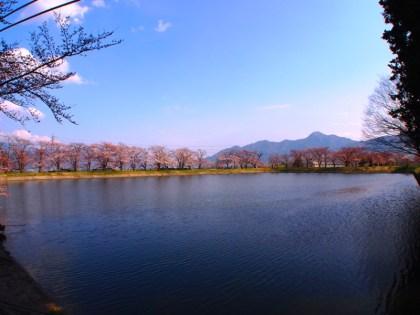 千曲市桜花見スポット稲荷山治田公園冠着山
