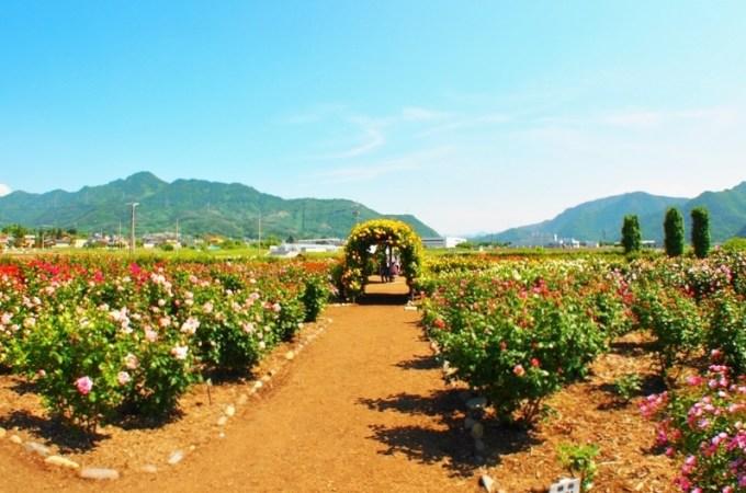 坂城町ばら祭り第9回ばら祭り2014 さかき千曲川バラ公園