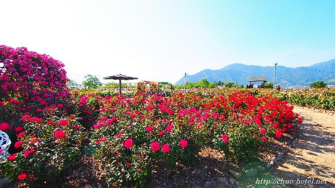 坂城町第13回ばらまつりさかき千曲川バラ公園