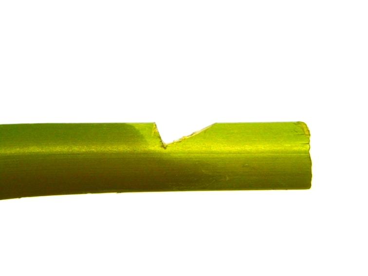 muesca hecha en la caña de bambu para hacer silbato