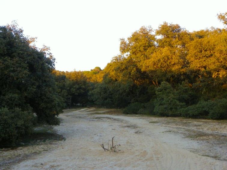 monte de el pardo sendero de arena entre encinas