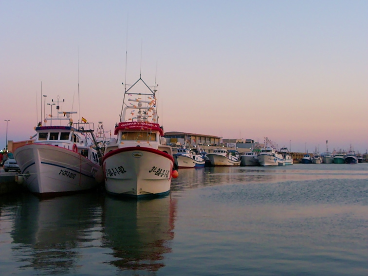 flota de barcos en el puerto pesquero de santa pola