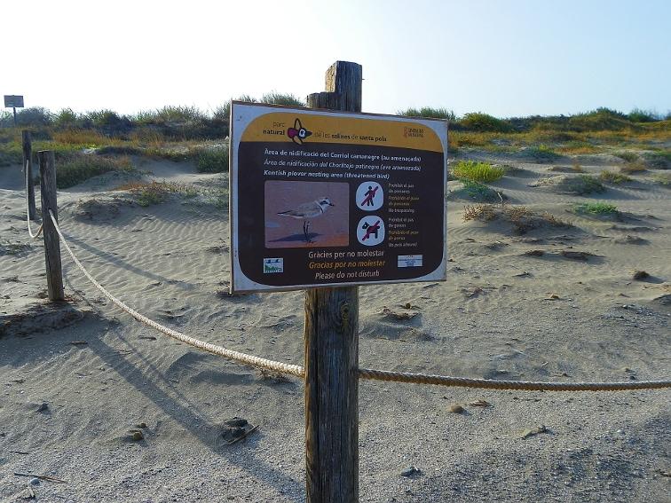 area de nidificacion de aves en el parque natural de las salinas de santa pola
