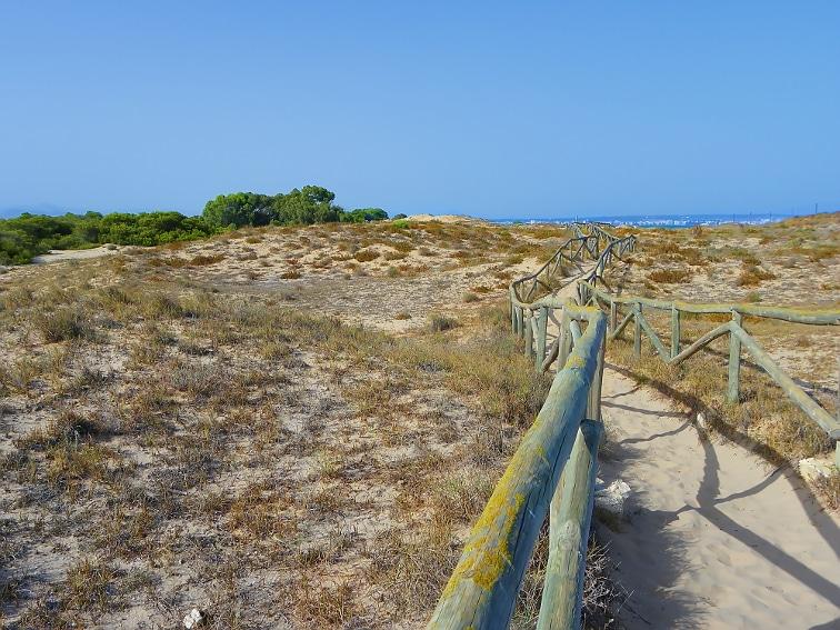 sendero entre dunas paralelo a la costa en el parque natural de las salinas de santa pola