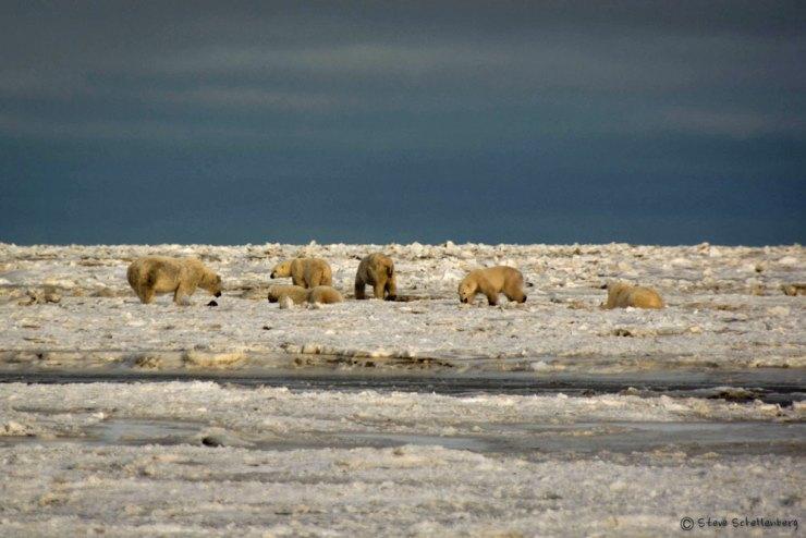 Lunch time continues at Nanuk Polar Bear Lodge.