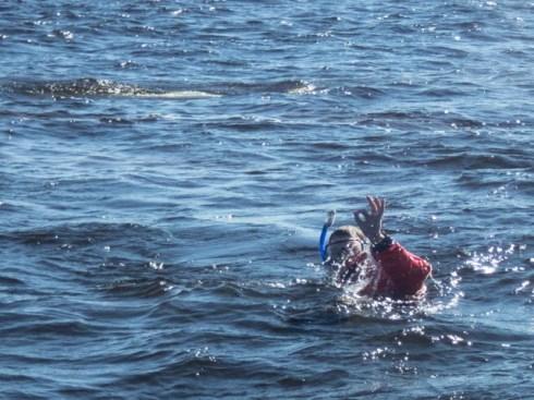 hifrombelugaswimmer