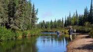 sea-run-brook-trout-on
