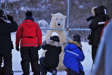 polar-bear-at-fence-Dymond-Lake-Ecolodge-Ian-Johnson