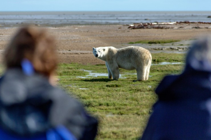 Guests photographing a polar bear at Nanuk Polar Bear Lodge on the Hudson Bay Odyssey. Robert Postma photo.