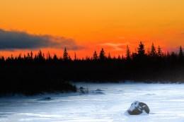 1st Place - Landscapes - Lyndell Daniel - Polar Bear Photo Safari at Nanuk - Churchill Wild 2018 Guest Photo Contest