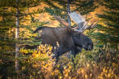 2nd Place - Wildlife - Steve Sinnock - Hudson Bay Odyssey
