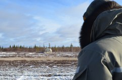 Polar bear viewing at Dymond Lake Ecolodge. Great Ice Bear Adventure. Dafna Bennun photo.
