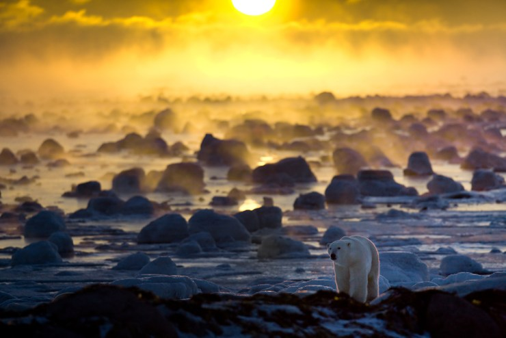 Polar bear in ice fog at Seal River. Anniversary book cover for Churchill Wild -- 25 Years of Adventure on the Hudson Bay Coast. Howard Sheridan photo.