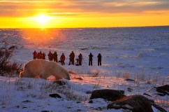 polar-bear-tour-churchill-wild-seal-river-heritage-lodge--ian-johnson