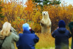 polar-bear-safari-churchill-wild-nanuk-polar-bear-lodge-jerry-grajewski