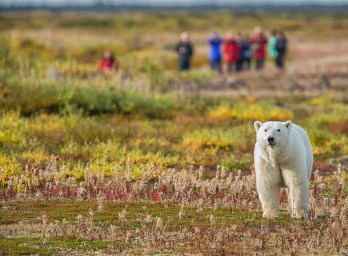 polar-bear-safari-churchill-wild-nanuk-polar-bear-lodge-robert-postma