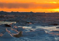 Polar bear watches sunset at Seal River Heritage Lodge. Kristina Thompson photo.