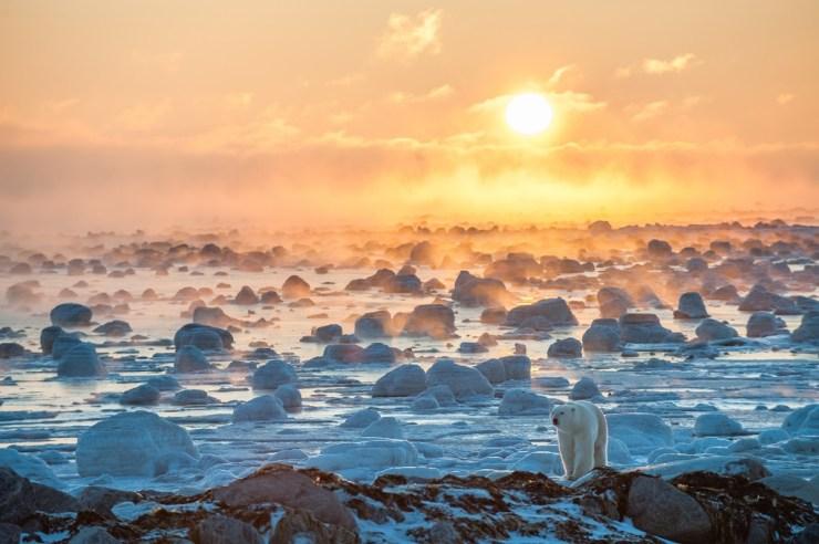 25th Anniversary Book Cover. Polar bear in ice fog at Seal River Heritage Lodge. Sean Crane photo.