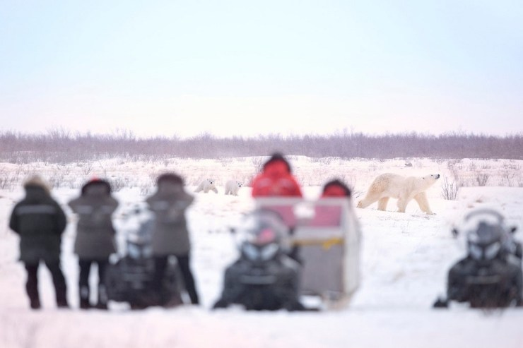 Mom leading the way at Nanuk Polar Bear Lodge. Ruth Elwell-Steck photo.