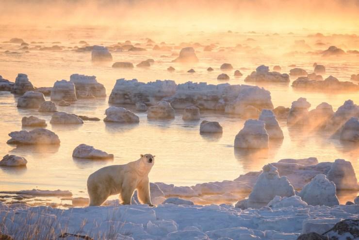 Polar bear in ice fog on the Polar Bear Photo Safari at Seal River Heritage Lodge. Rick Beldegreen photo.