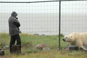 Conversation with a polar bear. Seal River Heritage Lodge. Christian Baum photo.