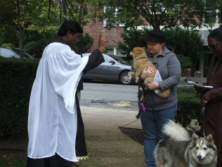 blessing-of-pets-2016-010