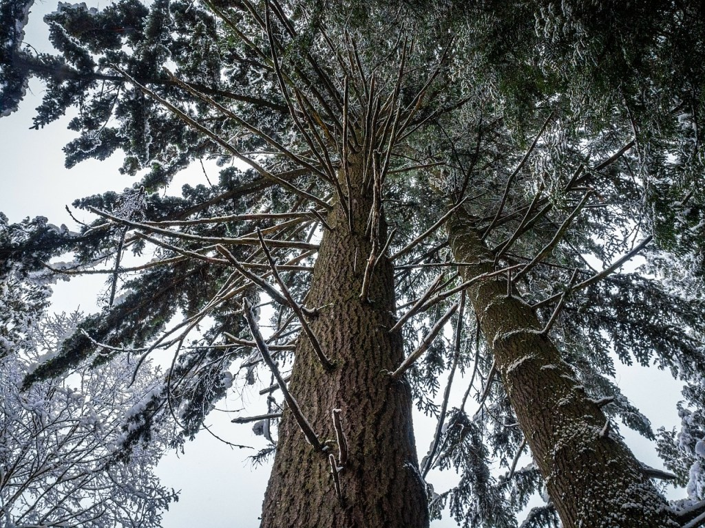 Tree Growing in The Woods, How Churches Grow