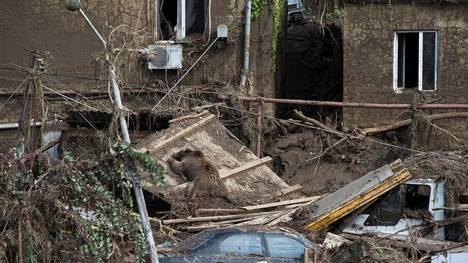 cuerpo-muerto-zoologico-Tbilisi-GeorgiaReuters_CLAIMA20150615_0142_18