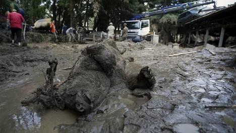 inundaciones-arrasaron-zoologico-Tbilisi-GeorgiaReuters_CLAIMA20150615_0139_18