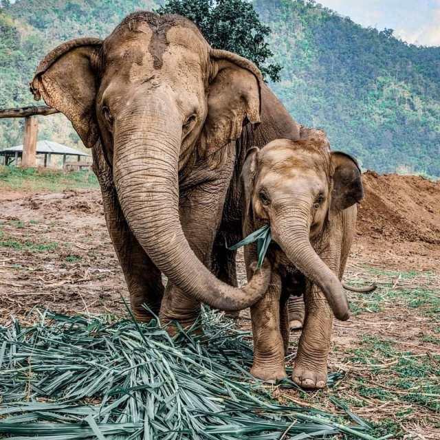 Kerala Pregnant Elephant Dies