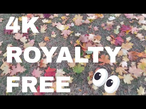 Free 4k Stock Footage & Sounds of Walking in Autumn Leaves (Royalty Free)