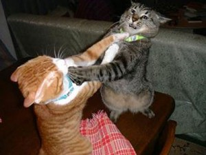 cats_fighting28