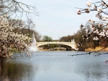 cầu hoa