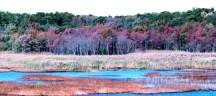 Chút màu thu trên đầm lầy
