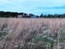 trên đồng cỏ