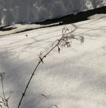 nhánh hoa khô