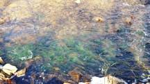 rêu đóng trên đá dưới lòng suối