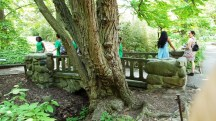cầu đá cội cây già người đẹp và nhóm trẻ em tham gia phong trào bảo vệ môi trường
