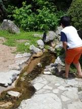 Một chú quạ đang tắm mát trong dòng suối, vùng vẩy tung tóe nước. Chú bé con này đến chọc phá và đuổi chim đi nhưng chim không sợ. Có lúc bức bách quá nó bay đi nhưng sau đó quay lại tiếp tục hưởng thụ dòng nước mát này.