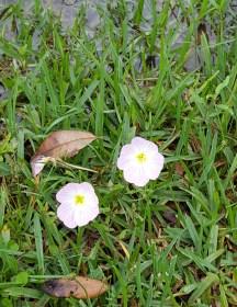 hoa dại mọc ven bờ nước